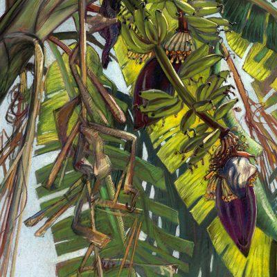 "Banana Blossom I (Costa Rica) 25"" x 19"" pastel on paper"
