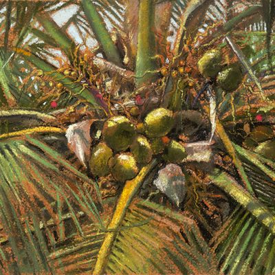 "Palm III (India) 10"" x 15"" pastel on paper"